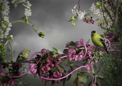 Jason DeMarte, Goldfinch-Pink Cord, 2015, archival inkjet, all sizes SOLD OUT