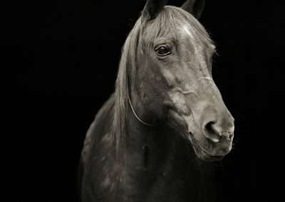 Isa Leshko, Pumpkin, Morgan Arabian Horse, Age 28, 2009, archival pigment print, 9 x 9 inches: image, 17 x 17 inches: frame, Edition of 15