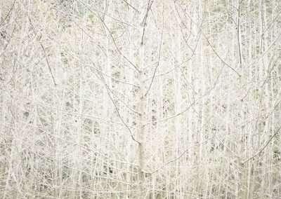 Debra Bloomfield, Journey to Wilderness