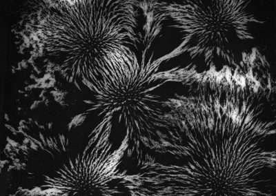 Shoshannah White, Magnetism #10, 2017, silver gelatin photogram, 10 x 8 inches