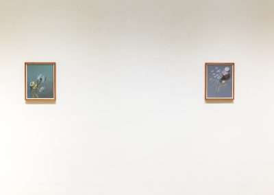 Matthew McConville • Flowers for the Anthropocene at Richard Levy Gallery